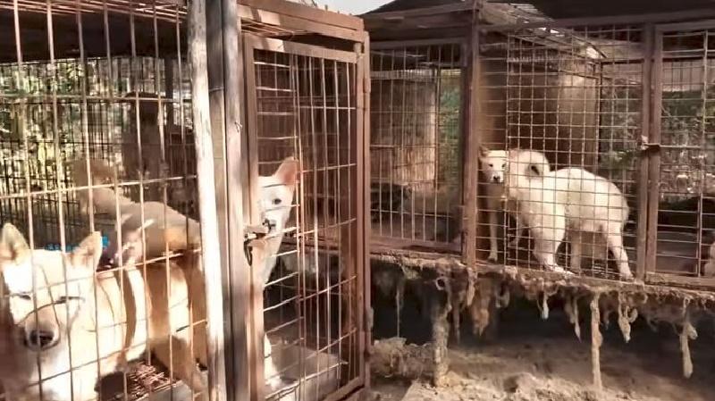 Kim Jon Un ordenó confiscar los perros mascotas para sacrificarlos ¿Será para comérselos?